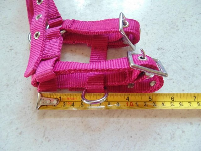 Image 4 of Tiny tiny  head collar , to fit, mini pony, goat, sheep,
