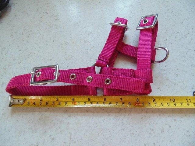 Image 6 of Tiny tiny  head collar , to fit, mini pony, goat, sheep,