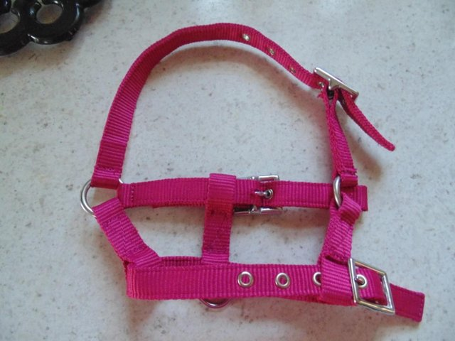 Preview of the first image of Tiny tiny  head collar , to fit, mini pony, goat, sheep,.