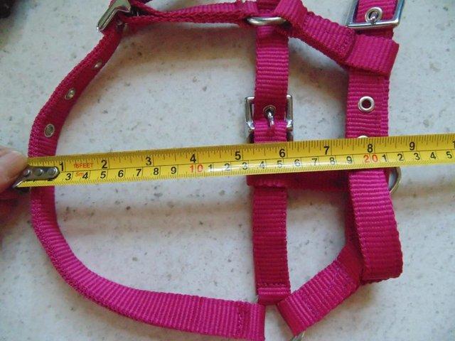 Image 10 of Tiny tiny  head collar , to fit, mini pony, goat, sheep,