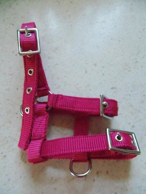 Image 2 of Tiny tiny  head collar , to fit, mini pony, goat, sheep,
