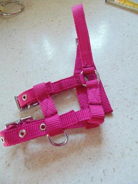 Image 5 of Tiny tiny  head collar , to fit, mini pony, goat, sheep,