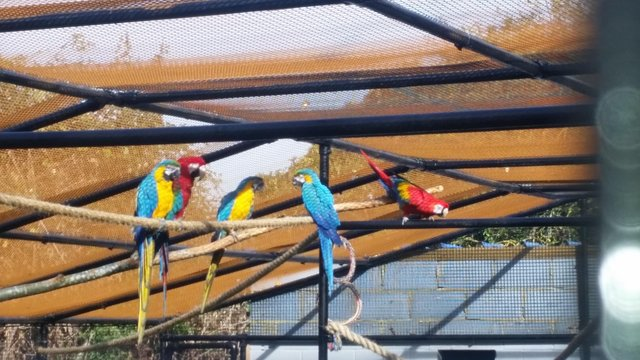 cockatoo - Birds, Rehome Buy and Sell | Preloved