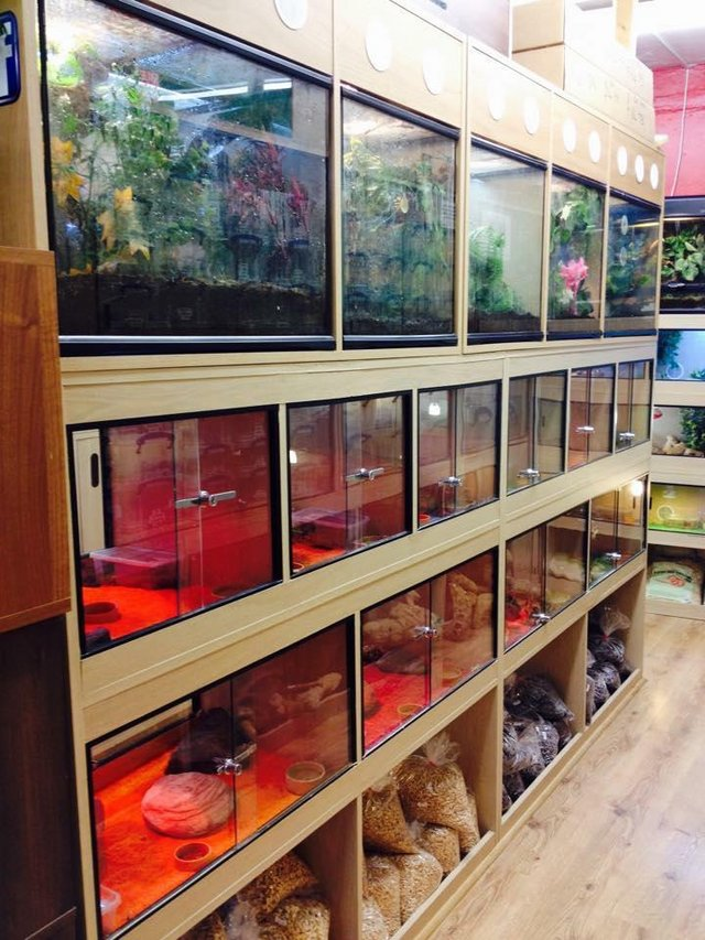 Image 3 of Warrington pets and exotics a fully stocked pet shop/store