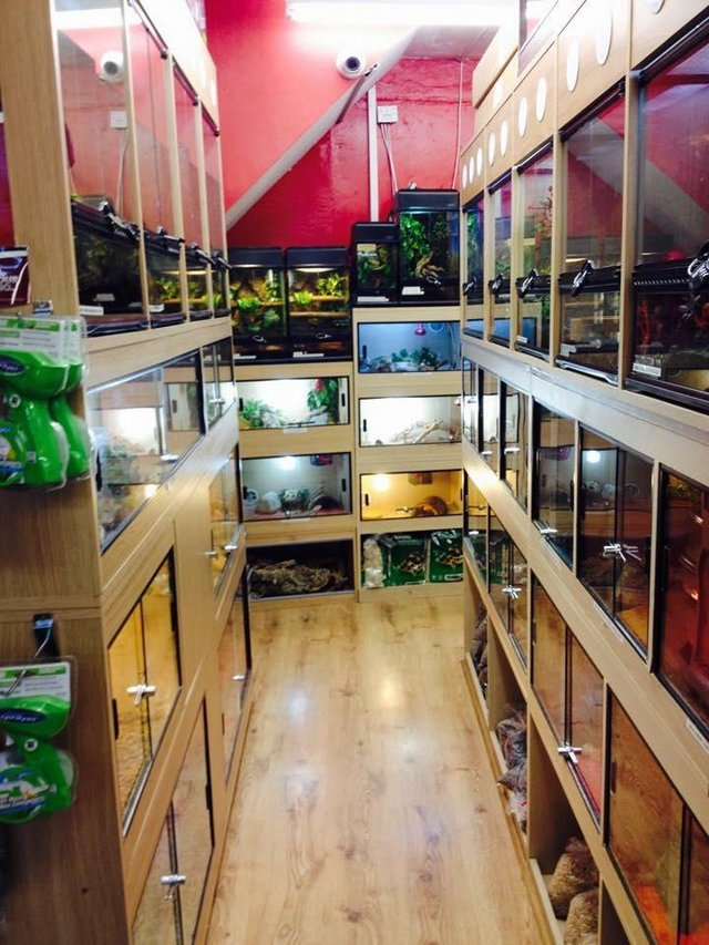 Image 9 of Warrington pets and exotics a fully stocked pet shop/store