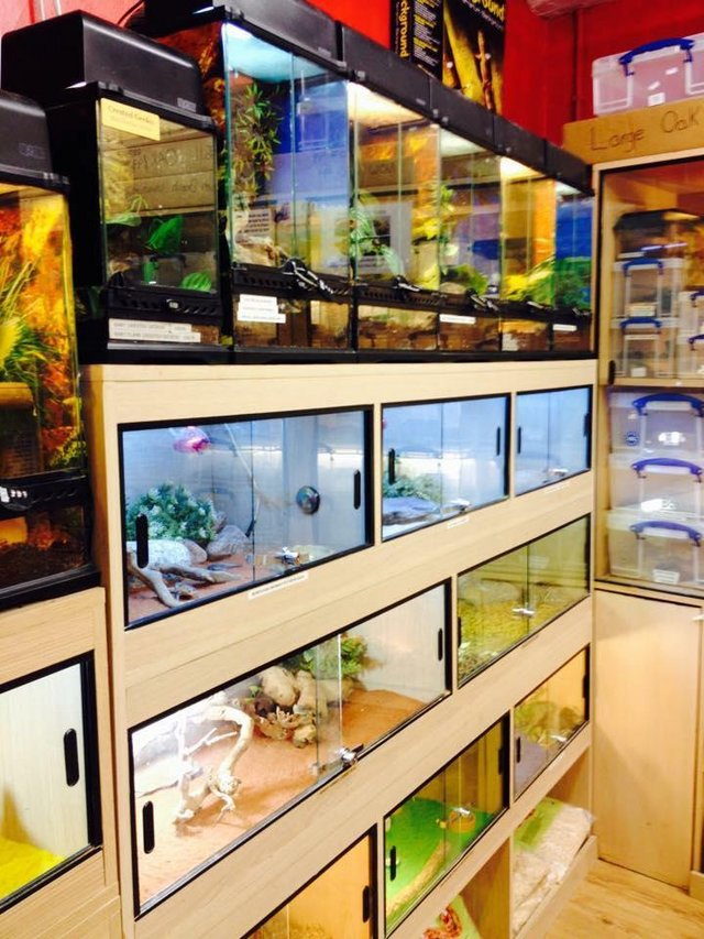 Image 10 of Warrington pets and exotics a fully stocked pet shop/store