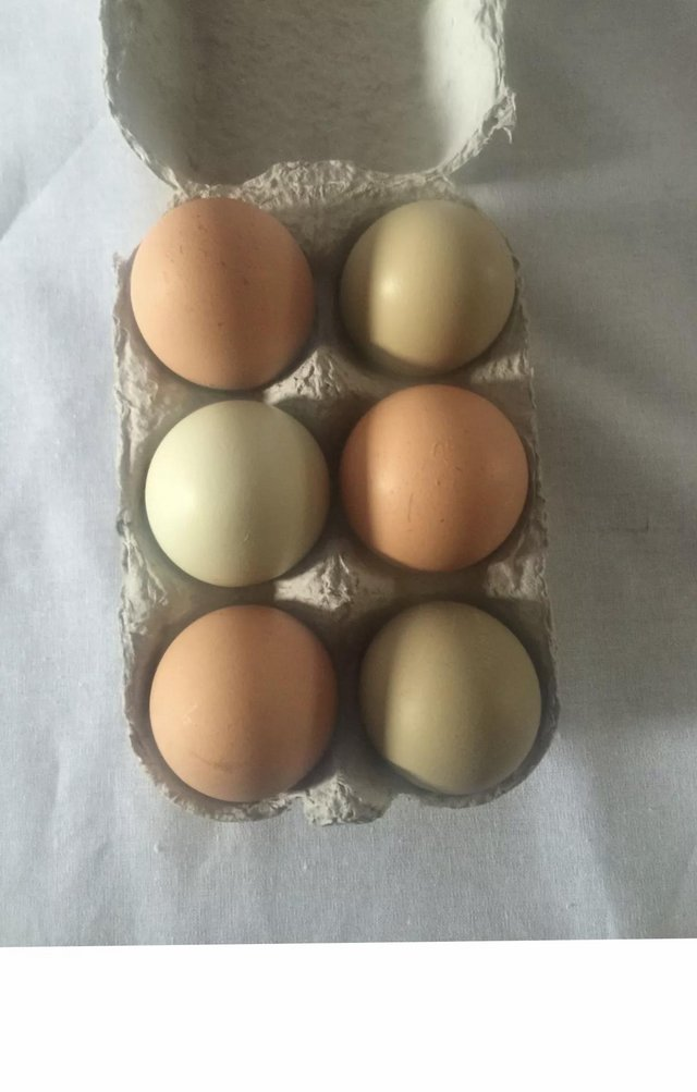 Image 3 of 6x fertile hatching chicken eggs