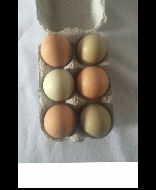 Image 2 of 12 fertile mixed hatching chicken eggs