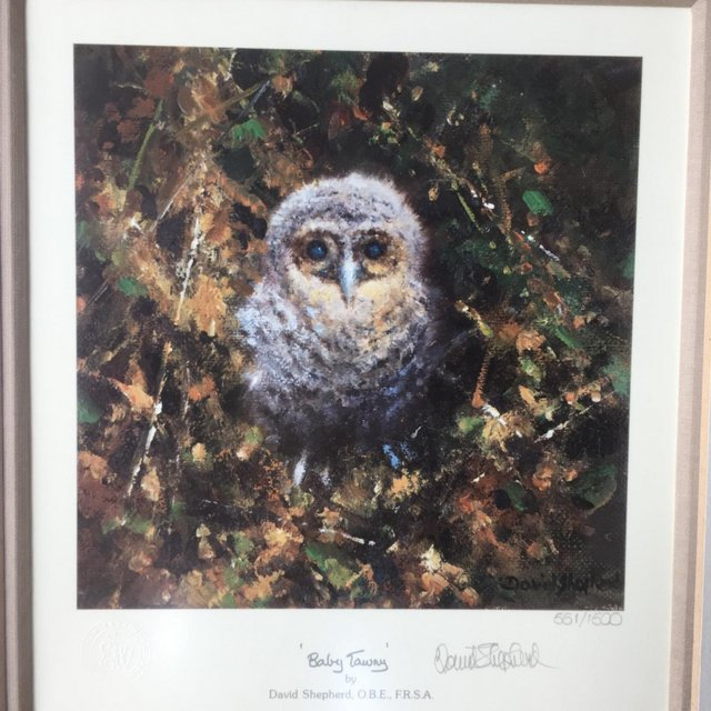 Preview of the first image of David Shepherd Baby Tawny signed & framed RARE 561/1500.