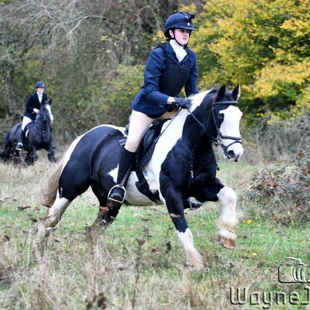 Image 2 of Vincent 14.1hh 6yo gelding for share in Arborfield
