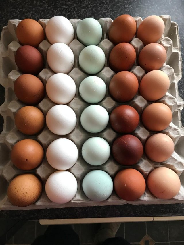 Preview of the first image of HATCHING EGGS FOR SALE.