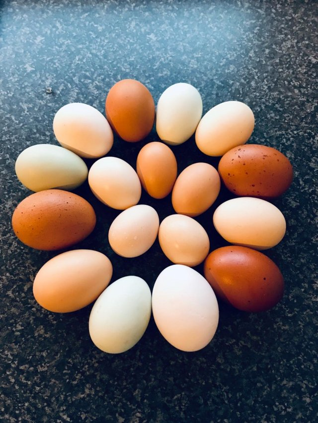 Image 4 of HATCHING EGGS FOR SALE