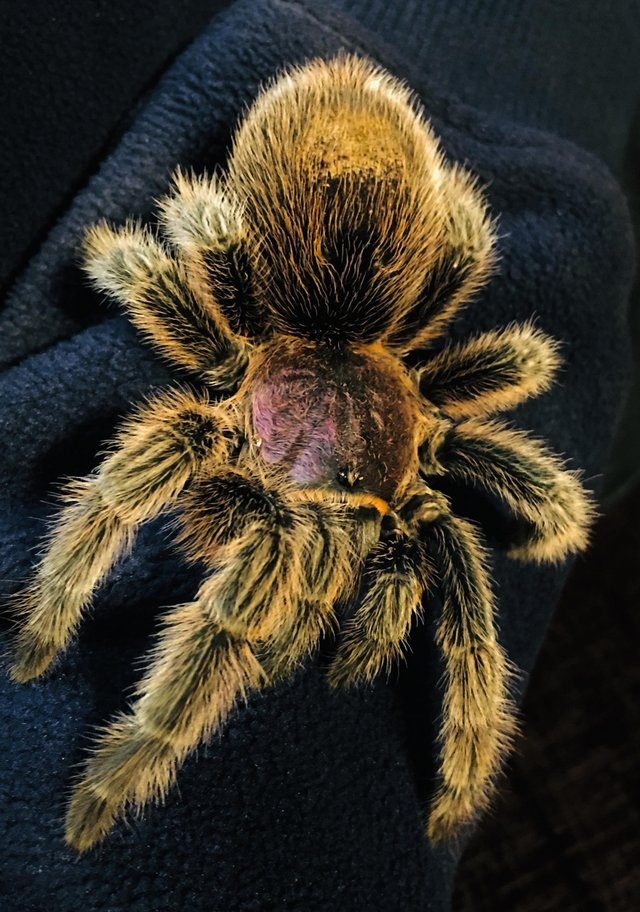 Image 2 of RE-HOME YOUR UNWANTED TARANTULAS AND OTHER INVERTS