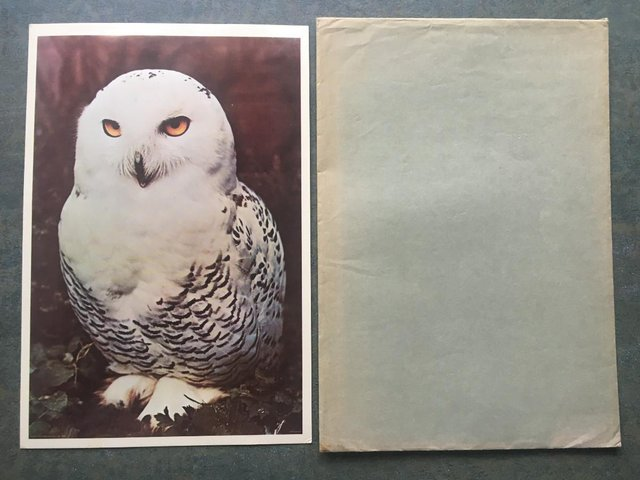 Preview of the first image of Unused vintage 1972 Postercard 31 Owl, Portal Publs,envelope.