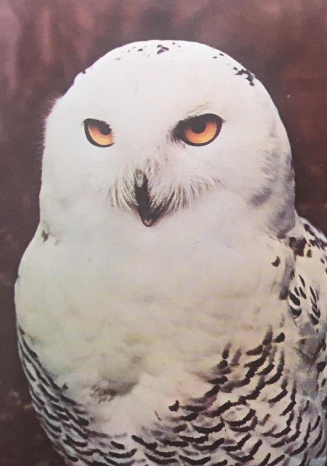 Image 3 of Unused vintage 1972 Postercard 31 Owl, Portal Publs,envelope
