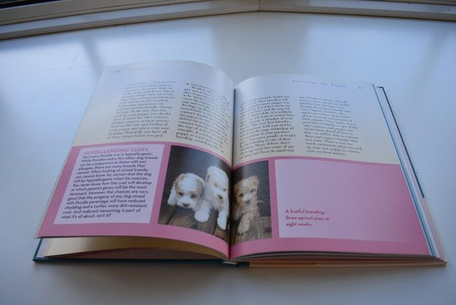 Image 5 of Cockapoo Book