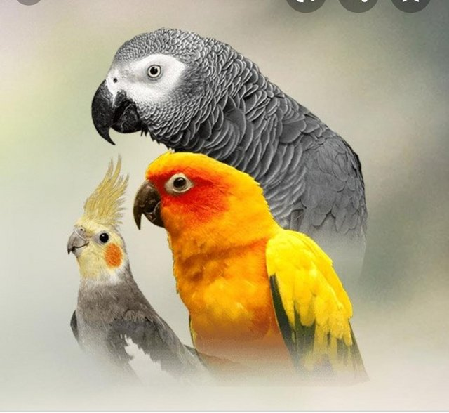 Preview of the first image of Caged and aviary birds.