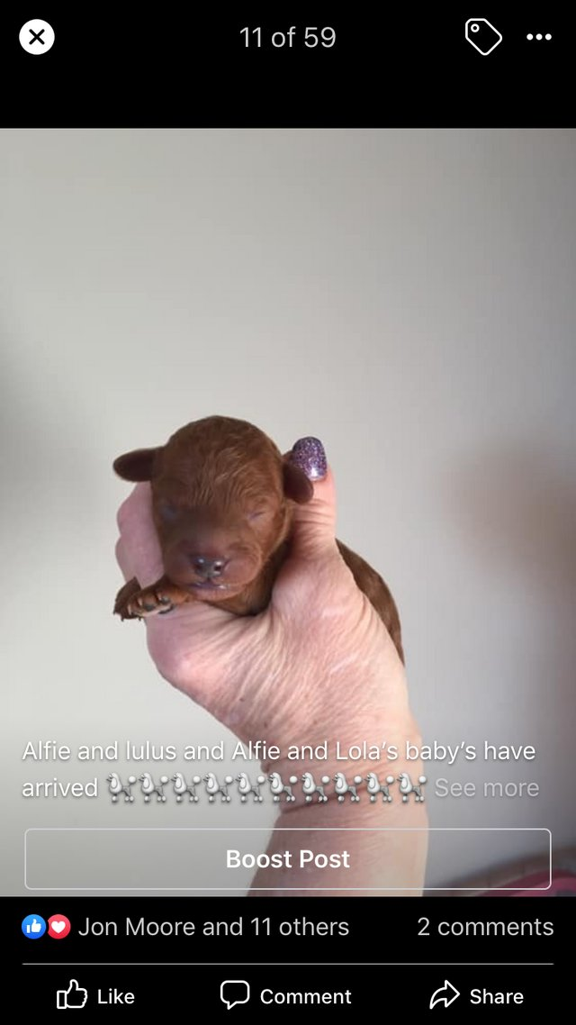 Image 9 of KC TINY TOY ALFIE FOR STUD
