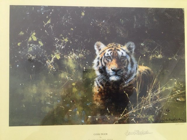 """Preview of the first image of David Shepherd Limited Edition Signed Print 'Cool Tiger""""."""