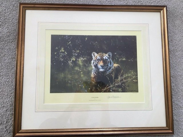 """Image 2 of David Shepherd Limited Edition Signed Print 'Cool Tiger"""""""