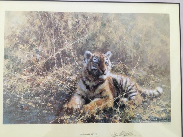 Image 2 of David Shepherd Limited Edition Signed print 'Teenage Tiger""
