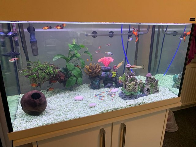Preview of the first image of Full set up tropical fish tank.
