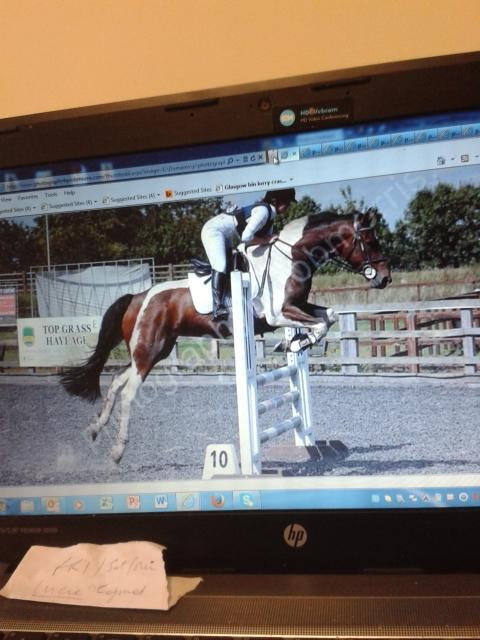 Image 2 of Share opportunity for 16.2hh horse