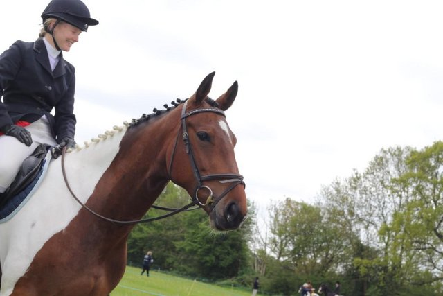 Image 3 of Share opportunity for 16.2hh horse