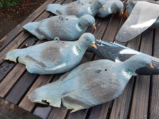 Preview of the first image of Shooting Woodpigeon Decoys.