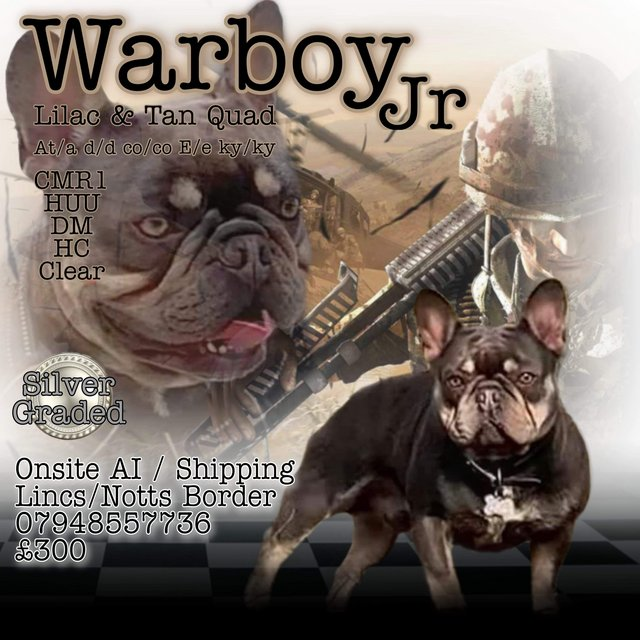 Image 24 of Kc Warboy junior for stud. Quad AT/a. Proven silver tested