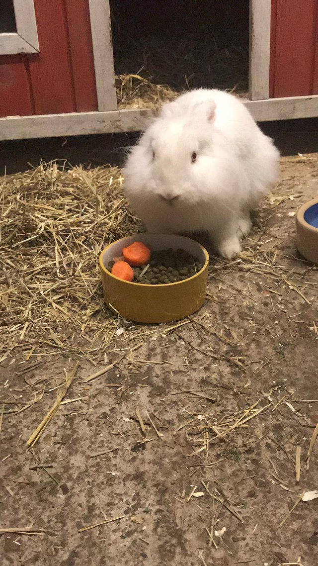 Image 3 of Male and female bonded rescue rabbits
