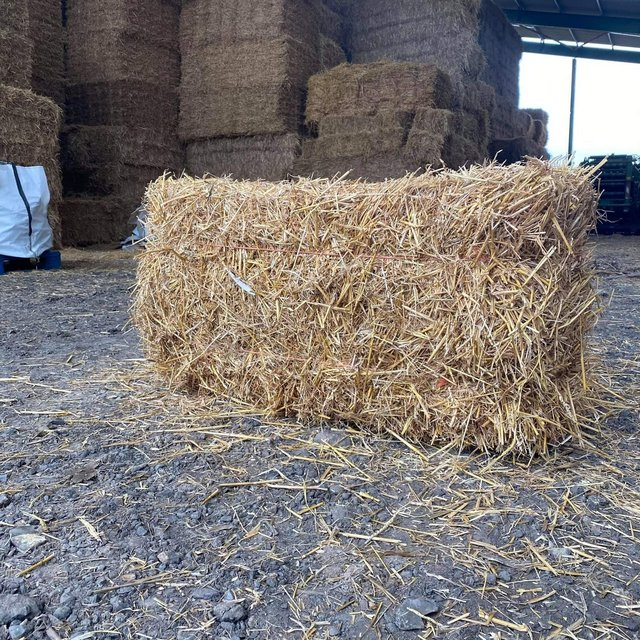 Image 6 of Barley straw bale in a bag FREE DELIVERY