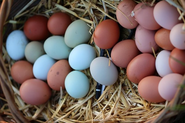 Image 11 of Hatching Eggs