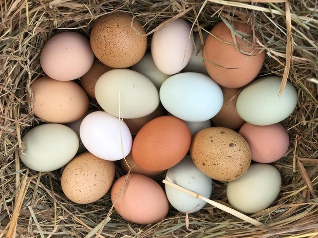 Image 2 of Family Hatching kits for home schooling - chicken / quail