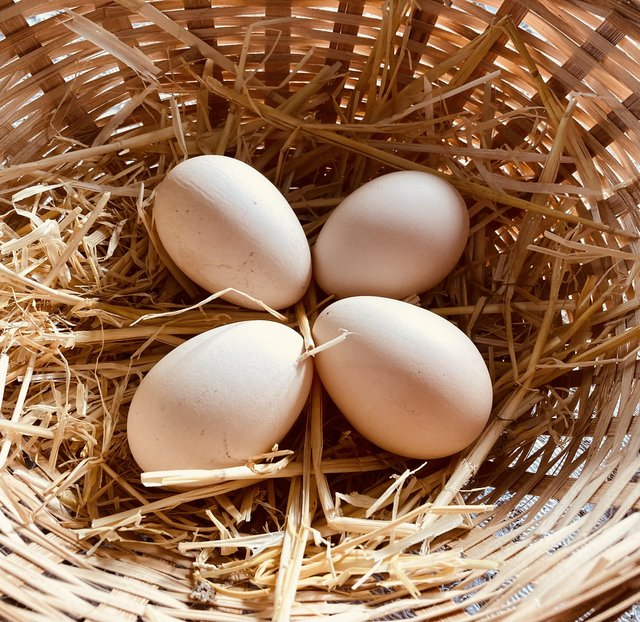Preview of the first image of Buff Orpington Chicken Hatching Eggs.
