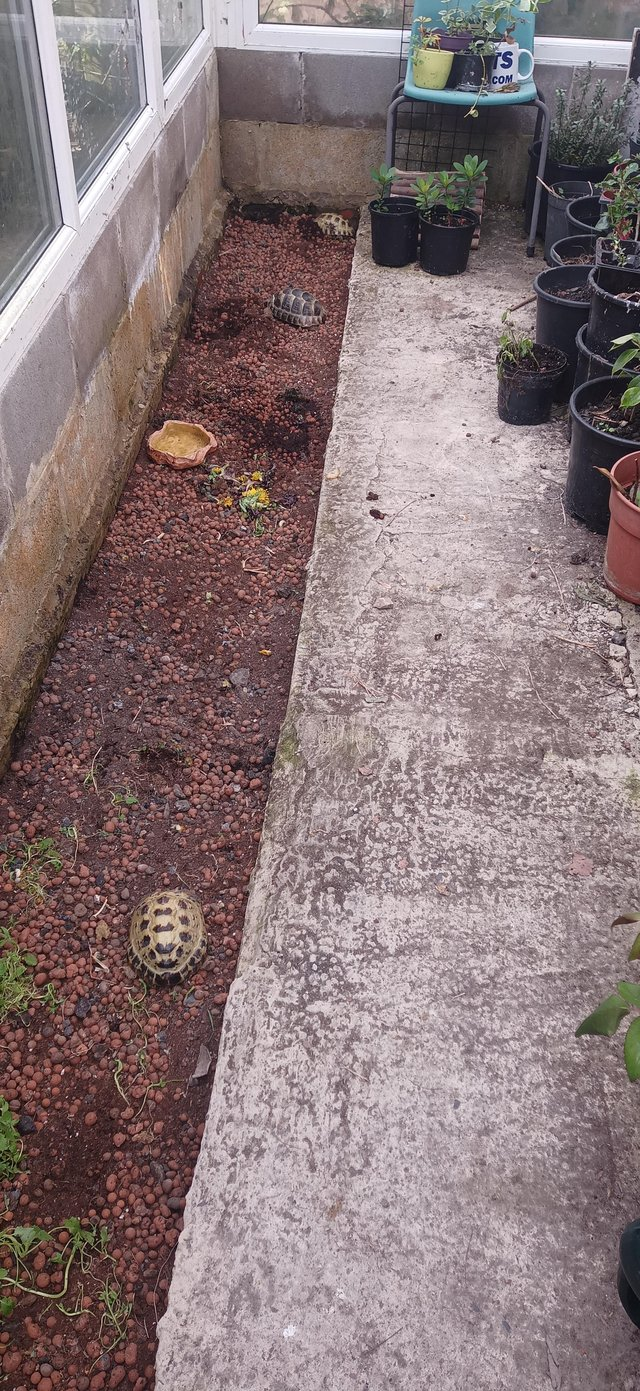 Image 3 of Tortoises rehome service, experienced professional keeper.