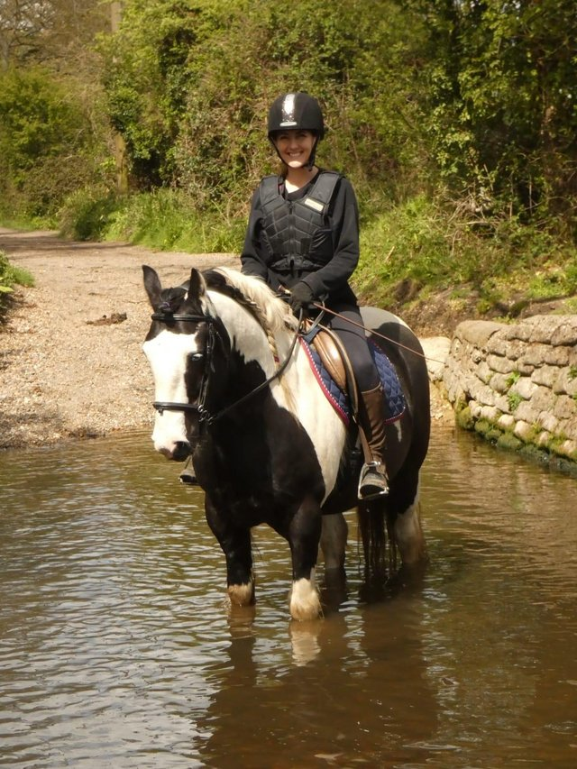 Image 4 of Vincent 14.1hh 6yo gelding for share in Arborfield