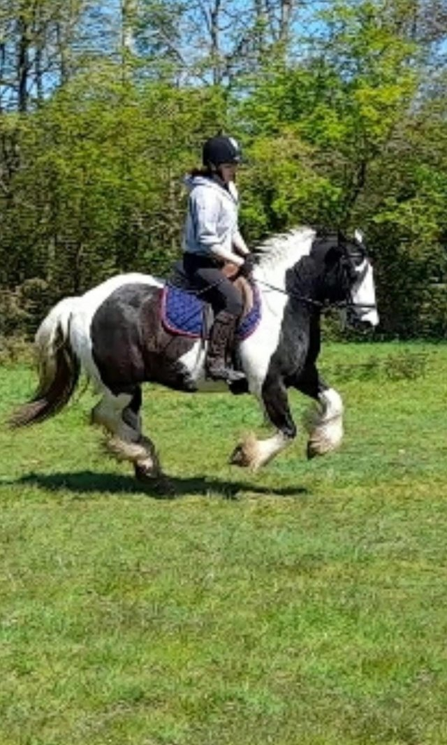 Image 5 of Vincent 14.1hh 6yo gelding for share in Arborfield