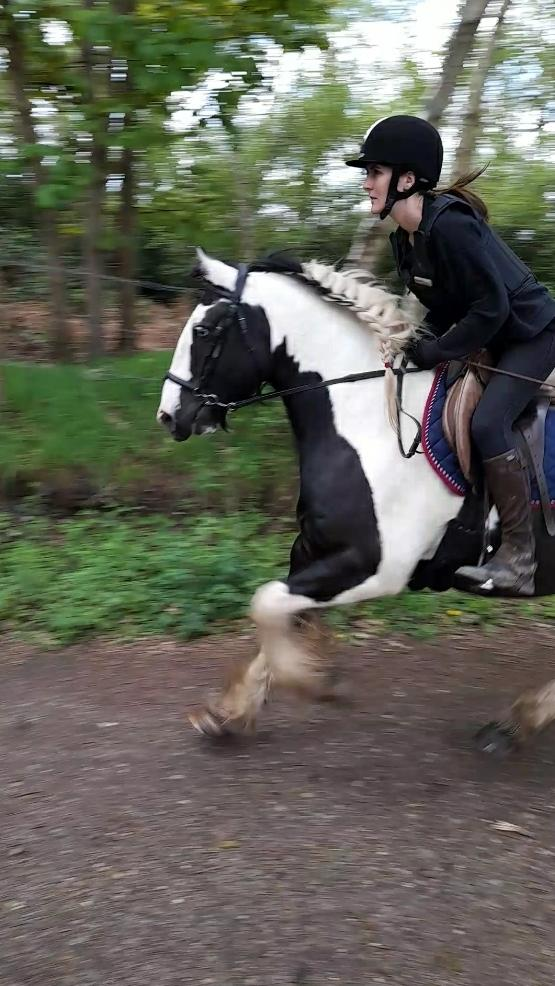 Image 7 of Vincent 14.1hh 6yo gelding for share in Arborfield