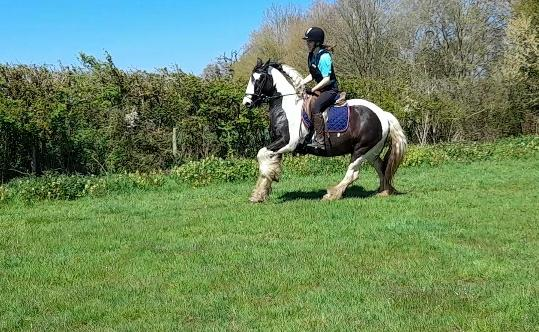 Image 9 of Vincent 14.1hh 6yo gelding for share in Arborfield