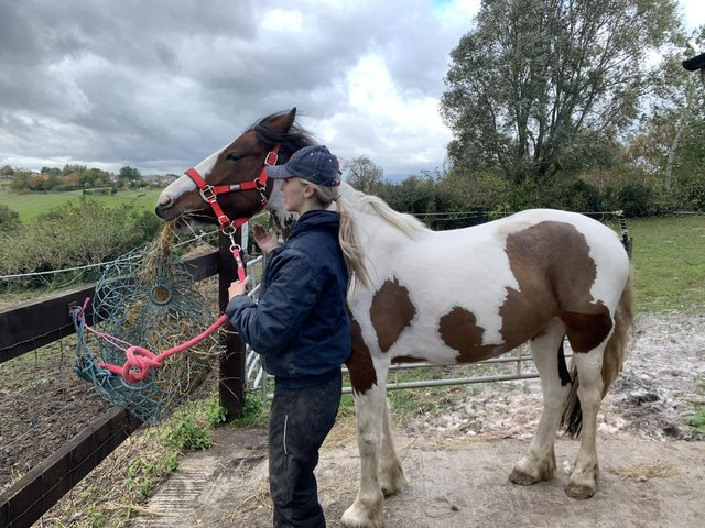 Preview of the first image of 14hh pony for loan.