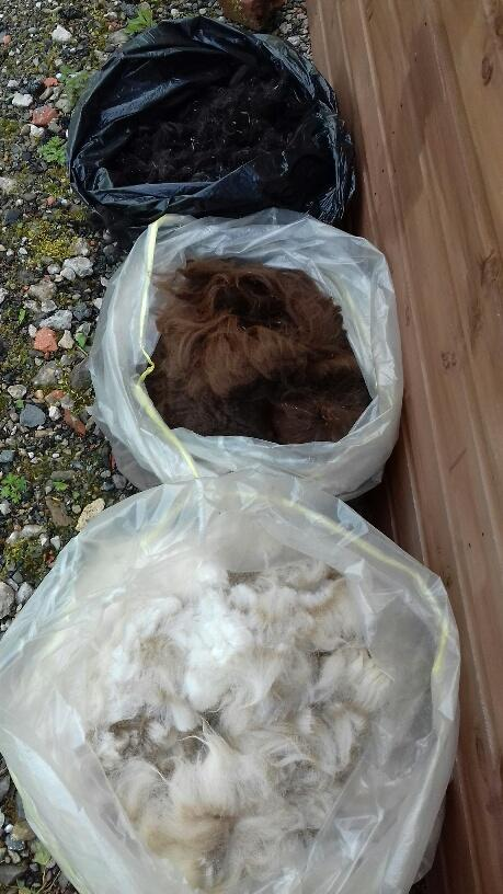 Preview of the first image of Alpaca Fleece.