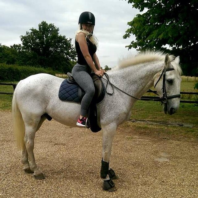 Image 2 of Looking for a horse share around Enfield