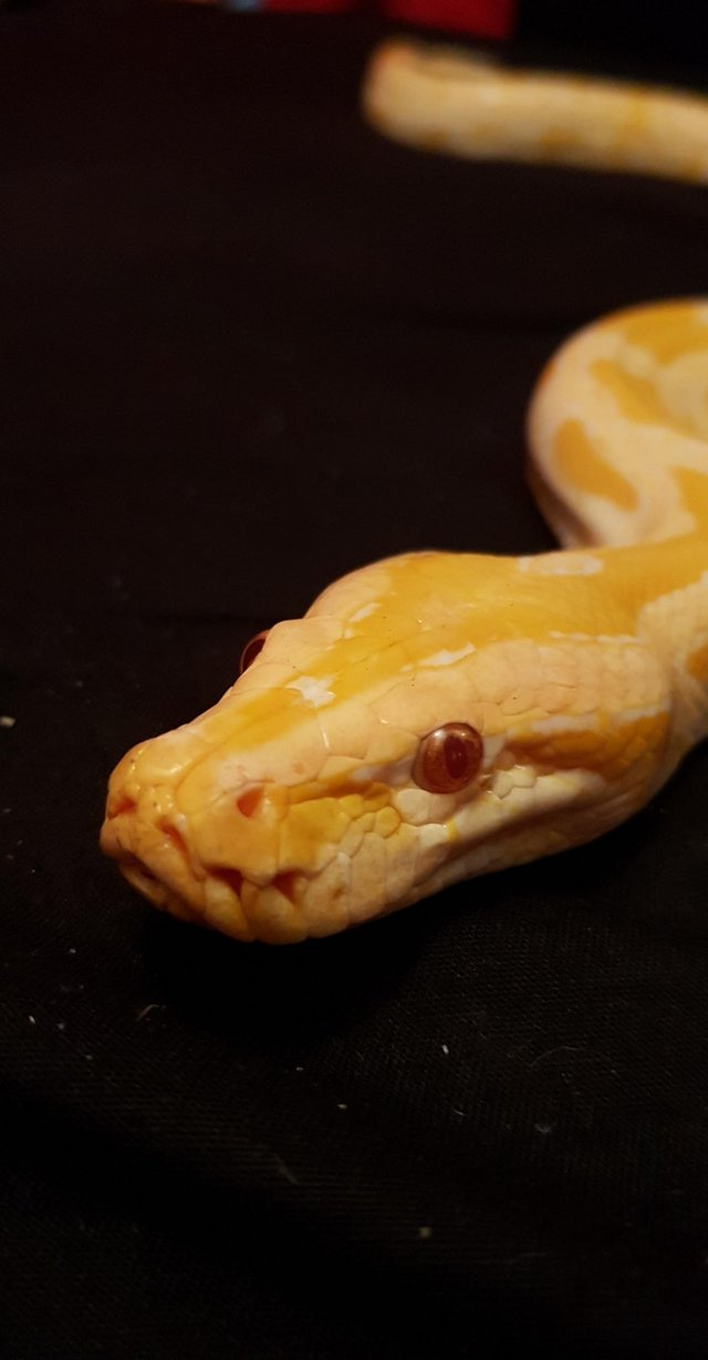 Image 2 of Willing to help unwanted reptiles and others