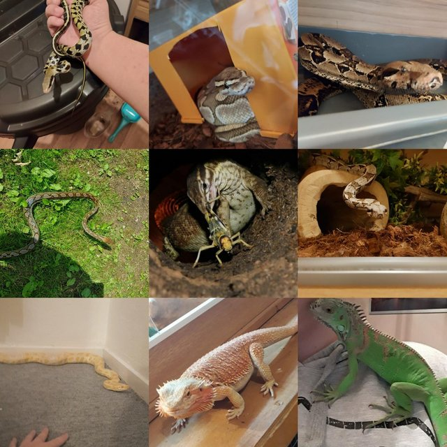 Image 3 of Willing to help unwanted reptiles and others