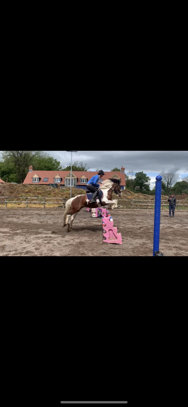 Image 3 of 14hh pony for loan