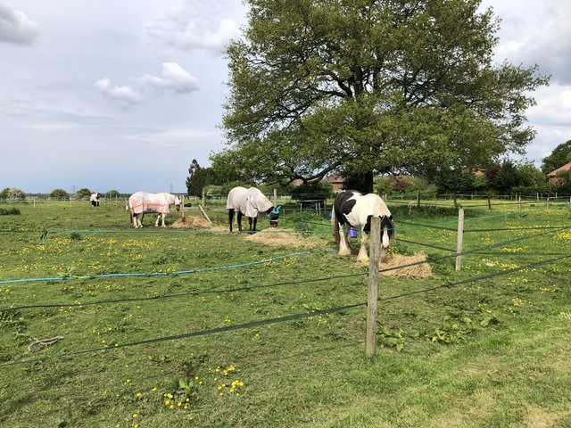 Image 4 of Horse grazing