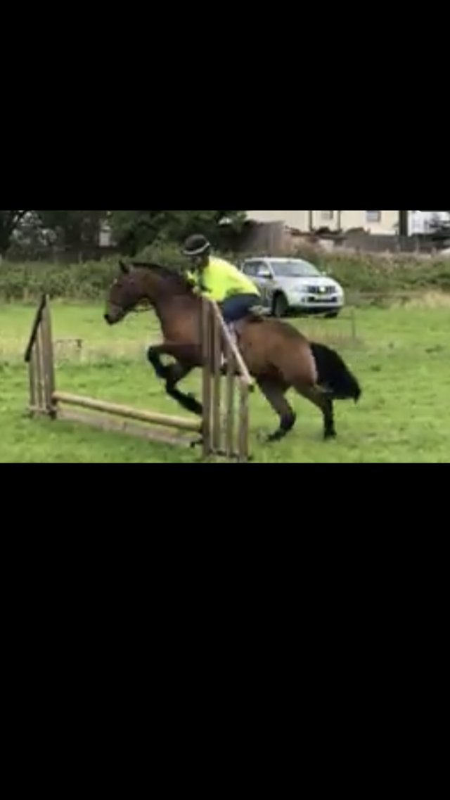 Image 5 of Pony 13.3 for part loan Bolton
