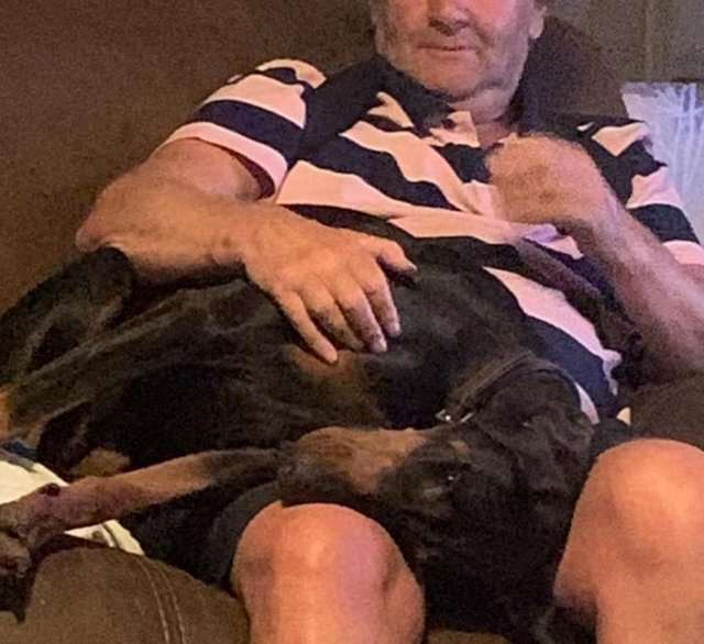 Image 12 of KC Registered Beautiful Dobermann puppies ready August 2021