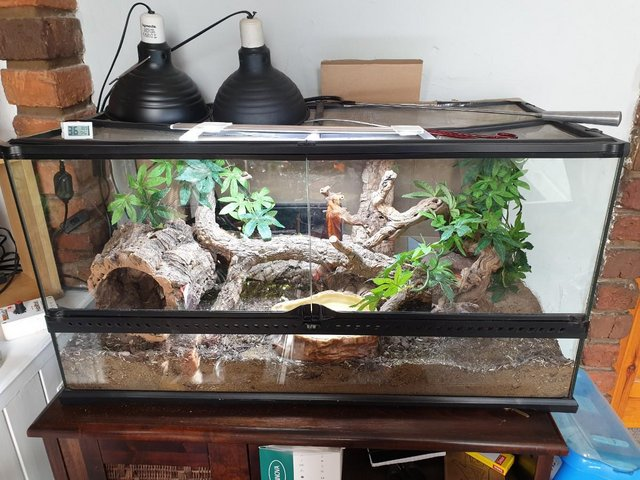 Preview of the first image of Full snake vivarium set up with or without snake..